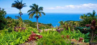 My Hawaii Hawaii Holiday Package Deals Amp Specials